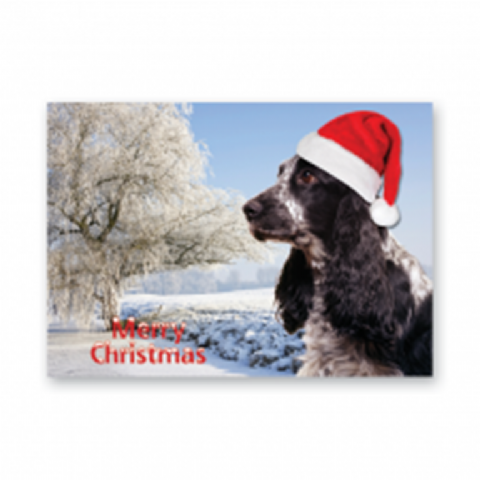 Cocker Spaniel  Christmas Card pack of five